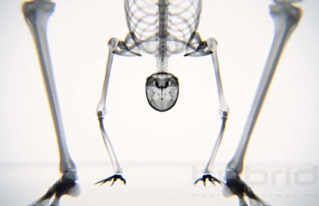 csonti1